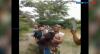 Ular Piton 10 Meter Ditangkap Warga