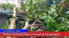 Pohon Tumbang Timpa 3 Rumah di Pangandaran