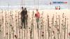 Mawar Merah untuk Korban Covid-19, 500 Ribu Warga Meninggal Dunia