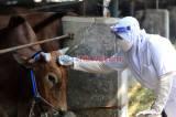 Jelang Idul Adha 1441 H, Petugas Cek Kesehatan Hewan Kurban