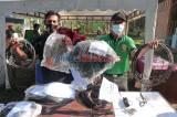 Tim Patroli Harimau Sumatera-Kerinci Seblat Berhasil Membersihkan 2.846 Jerat