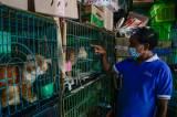 Berburu Hewan Peliharaan di Pasar Barito