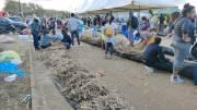 Mauritania Gunakan Rambut untuk Atasi Tumpahan Minyak Kapal Jepang