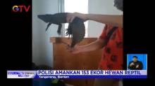 Penyelundupan Satwa Liar, 153 Ekor Reptil Berhasil Diamankan