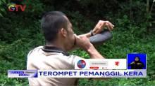 Panggil Kera di Hutan Sibatu Loting, Pemandu Wisata Gunakan Terompet Tanduk Kerbau