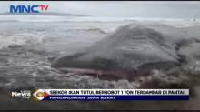 Terbawa Arus Laut Hiu Tutul Ditemukan Terdampar di Pantai Pangandaran