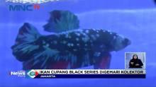 Sejumlah Pehobi Ikan Cupang Ikuti Kontes Black Series di TMII