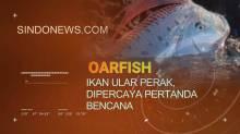 Oarfish, ikan Ular Perak, Dipercaya Pertanda Bencana