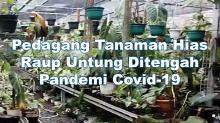 Pedagang Tanaman Hias Raup Untung Ditengah Pandemi Covid-19