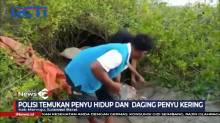 Polisi Gerebek Tempat Pengolahan Daging Penyu di Mamuju Sulawesi Barat
