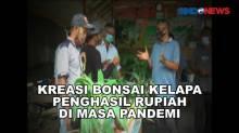 Kreasi Bonsai Kelapa Penghasil Rupiah di Masa Pandemi