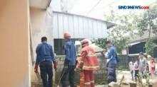 Penemuan 6 Anak Ular Kobra Hebohkan Warga Desa Tegal Waru Bogor