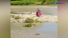 Bikin Heboh, Buaya Berkalung Ban Kembali Muncul di Palu