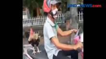 Viral! Kakek Bonceng Ayam Jago dengan Motor di Bali