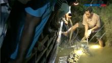 Kerap Lukai Warga, Buaya 4 Meter Berhasil Ditangkap di Pasaman