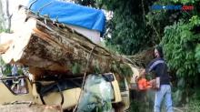 Mobil Truk di Bali Tertimpa Pohon akibat Cuaca ekstrim, 1 Orang Tewas