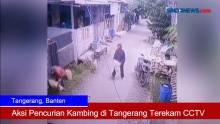 Aksi Pencurian Kambing di Tangerang Terekam CCTV