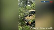 Hujan Deras di Makassar, Pohon Tumbang Timpa Kendaraan Bermotor
