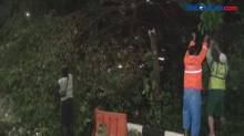 Sejumlah pohon besar di Jaksel Tumbang usai Hujan Deras