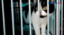 Jasa Penitipan Kucing di Malang Penuh Sejak H10 Lebaran