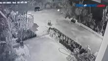 Kemunculan Beruang Madu Terekam CCTV
