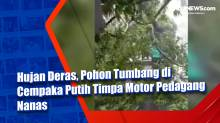 Hujan Deras, Pohon Tumbang di Cempaka Putih Timpa Motor Pedagang Nanas