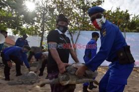 25 Ekor Penyu Sitaan Dilepasliarkan di Pantai Kuta Bali