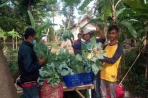 Misi Teknik Pertanian Taiwan Melakukan Kegiatan Pertanian Mengakar di Indonesia Selama 44 Tahun
