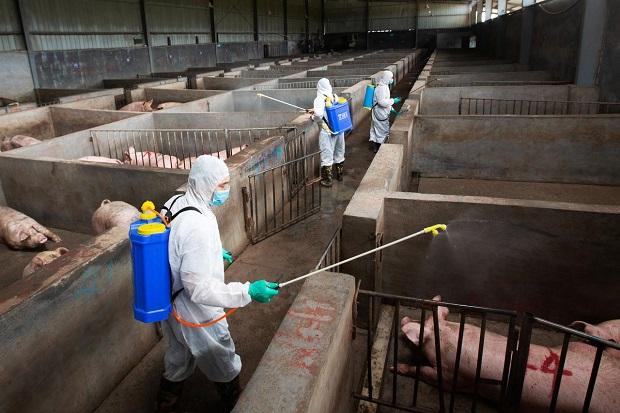 Virus Flu Baru Berpotensi Jadi Pandemi Muncul di China