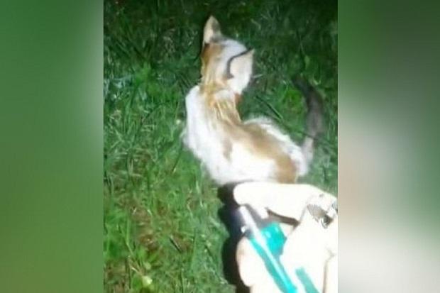 Anak Kucing Dibakar Hidup Hidup Rp34 6 Juta Untuk Buru Pelaku