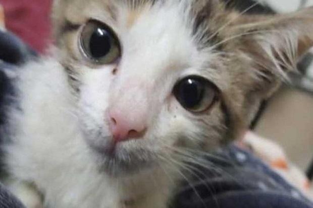 ABG Pakistan Dilaporkan Memerkosa Anak Kucing hingga Akhirnya Mati