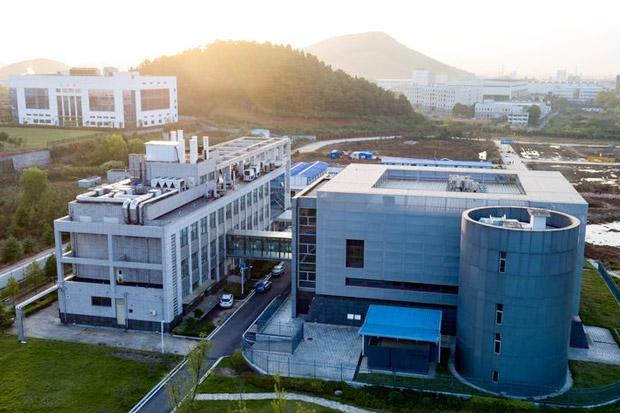 Virologi Bat Woman Sebut Virus Corona Bukan dari Laboratorium Wuhan