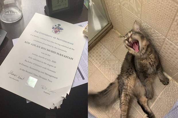 Kucing Nakal Ini Viral Setelah Mengunyah Ijazah Universitas Pemiliknya