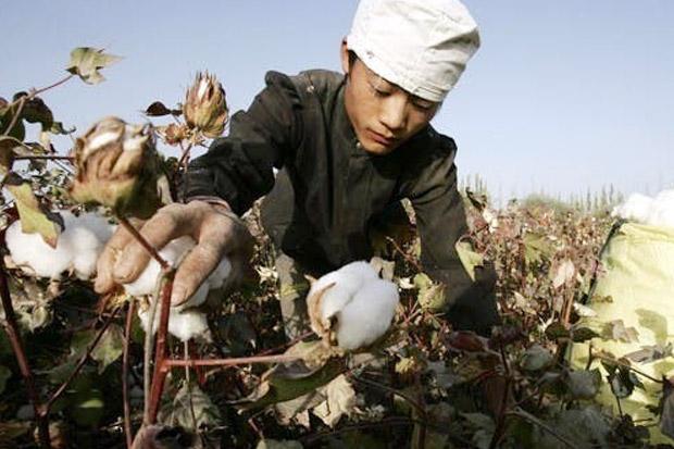 Hasil Kerja Paksa, AS Larang Produk Kapas dan Tomat dari China