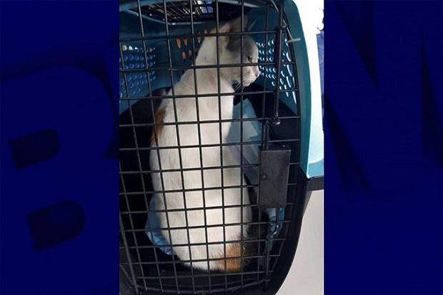 Kucing Ini Tertangkap Basah Selundupkan Narkoba ke Penjara