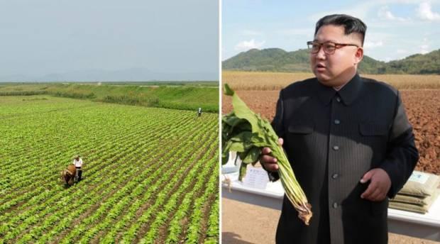Pisang Rp650.000, Kopi Rp1,5 Juta, Krisis Pangan Korea Utara Makin Brutal