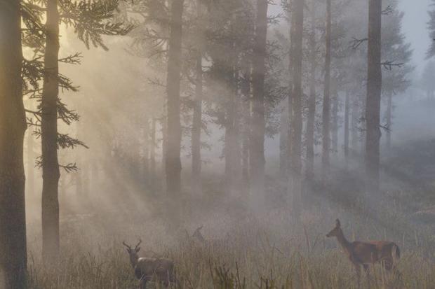 Hasil Riset: Game Komputer Bantu Pemain Belajar Tentang Alam Liar