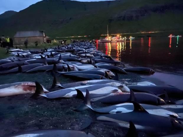 Sadis, 1.500 Lumba-lumba Dibunuh di Kepulauan Faroe