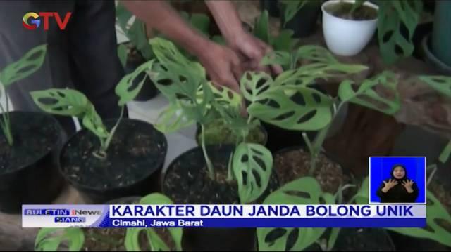 Video Janda Bolong Jadi Primadona Saat Pandemi